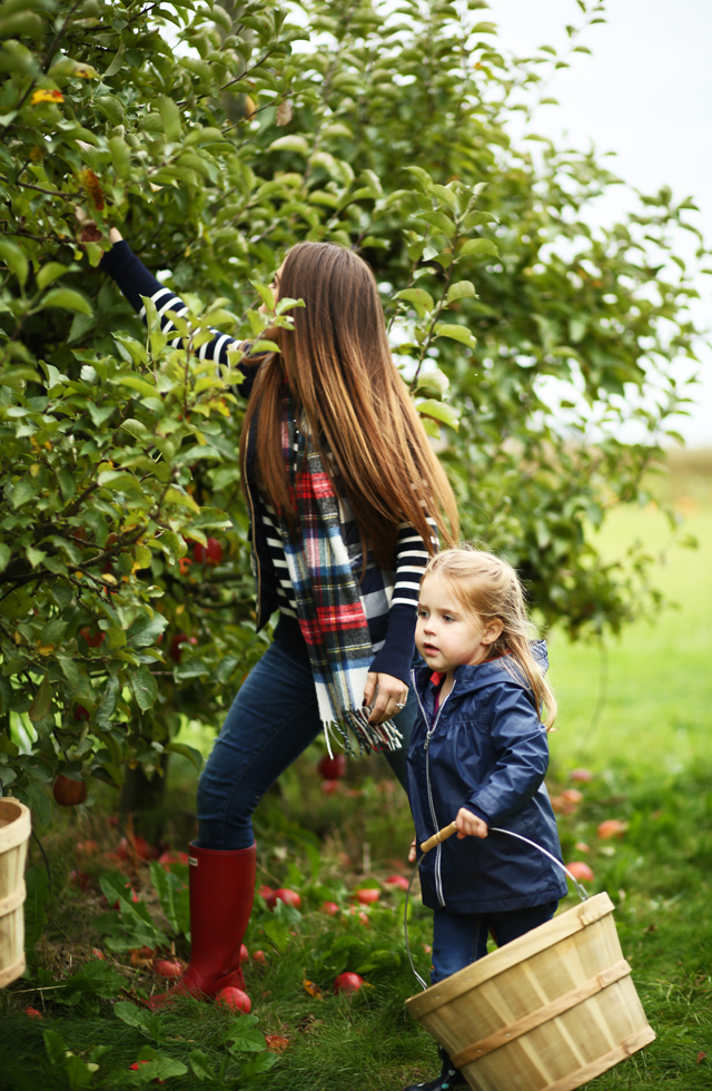 apple picking PNW with kids