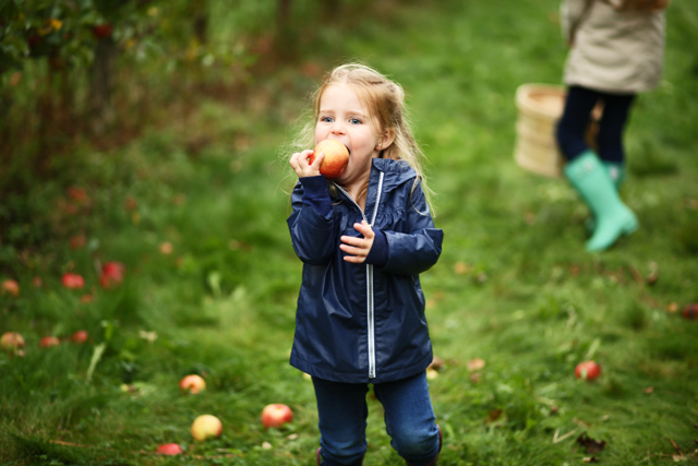 fall activity apple picking with kids
