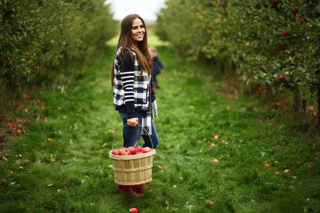u-pick apples outside of seattle